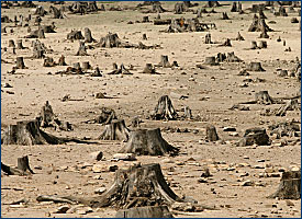 Destroyed Forest